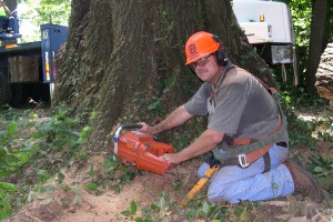 Tree Removal - Arbor Management Associates
